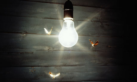 Moth diving towards the light