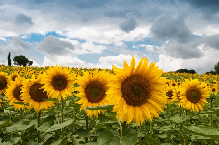 nature-field-summer-quantity (1)